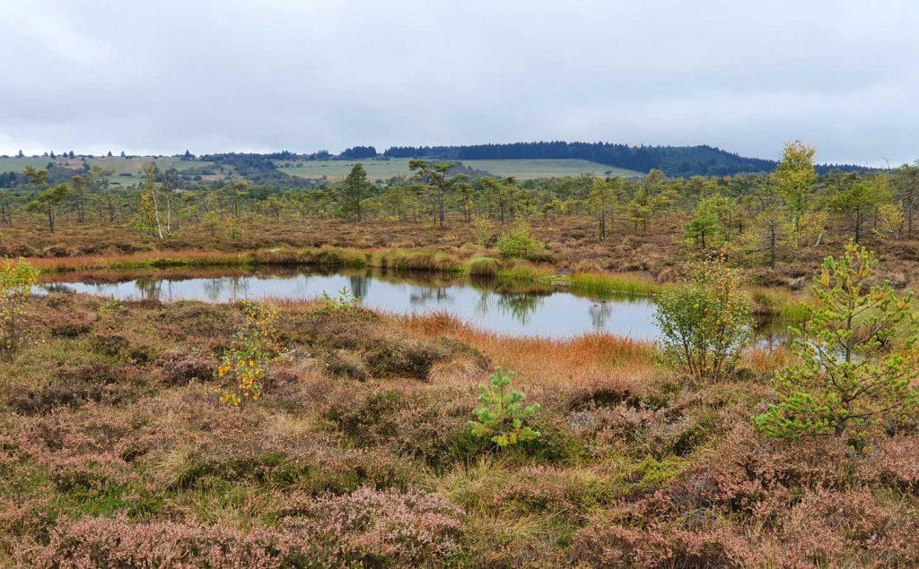 Schwarzes Moor in Fladungen 2020